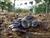 集団越冬するサツマゴキブリ