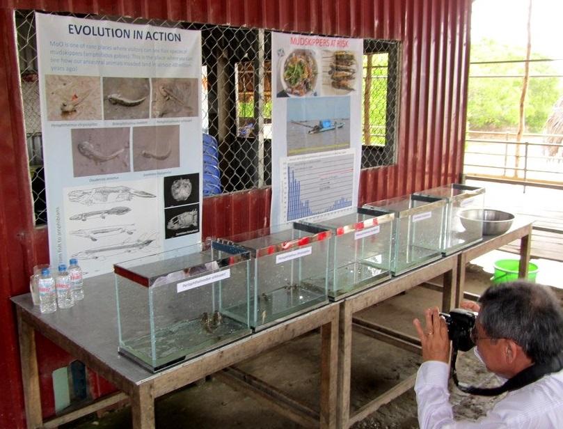 この場所に貴重な生態系があると訴えるポスターと、この干潟に生息する5種と養殖1種のマッドスキッパー