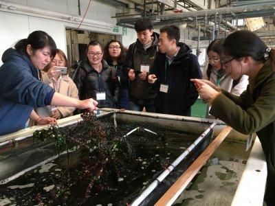佐世保市水産センター 稚ウニの生産現場の視察