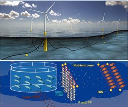 洋上風力発電と沖合養殖との共生プロジェクトのイメージ図