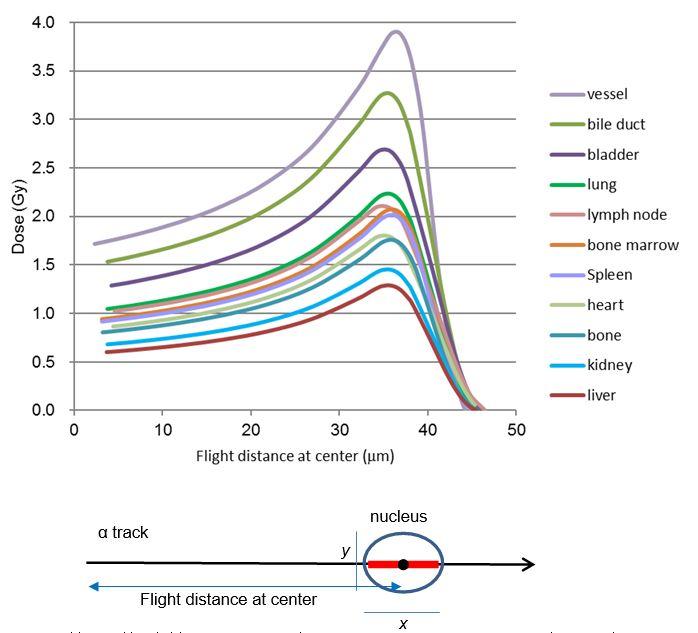 Fig. 2. 楕円形細胞核を通過する時のアルファパーティクル一個の吸収エネルギー