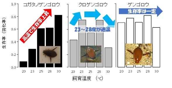異なる温度条件下で飼育したときのゲンゴロウ類幼虫の羽化率